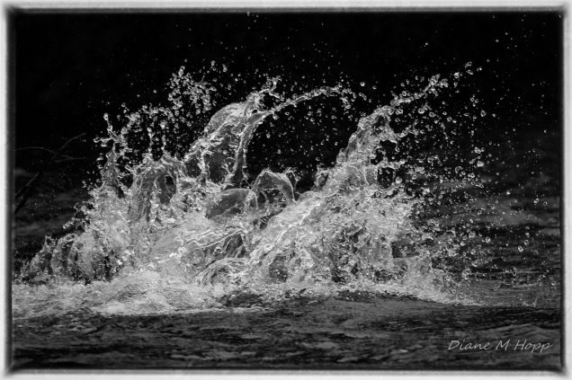 Scavenger Hunt #16 - Liquid Splash - DMHopp