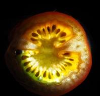 Scavenger Hunt #24 Center of fruit,K.Haggkvist