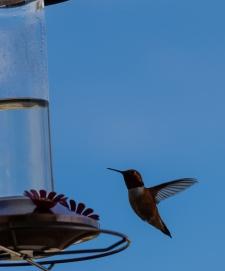 SH #12 - Bird in flight - Tamara Isaac