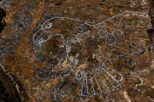 SH #25 - Sculpture/Carving - Bug - Tamara Isaac