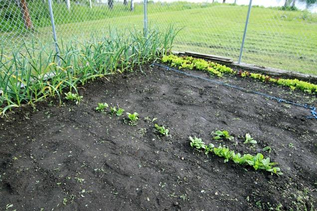 Something in a Veggie Garden 28 Doug B
