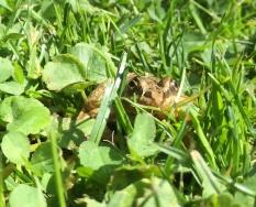 1 Closeup living frog Monika Paterson