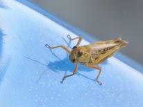 19 Bug Monika Paterson