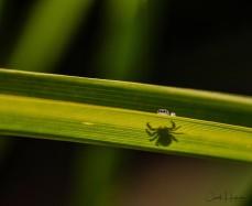 19-Bug_Oh Hello-CJJ
