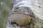 20 Fungi Monika Paterson