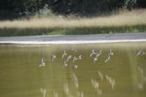 21 Bird s in Flight Monika Paterson