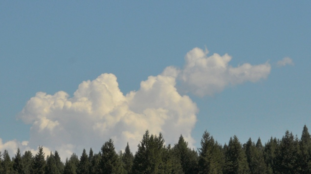 22 Animal cloud formation Dragon Monika Paterson