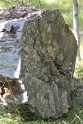 36 Tree rings over 100 Monika Paterson