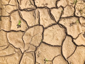 38-Cracks in Dry Earth Pattern-CJJ-2