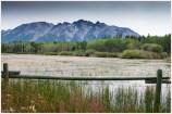 Marsh AMBrown