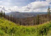 Forest Fire Burn, Viewpoint east of Hanceville - Derek Chambers