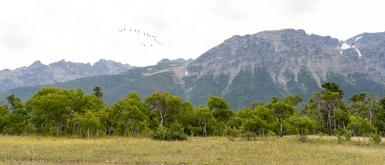 The Geese Are Leaving? On the way to Chilko Lake Campsite - Derek Chambers