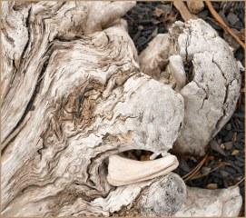 Driftwood Design, Chilko Lakeshore - Derek Chambers