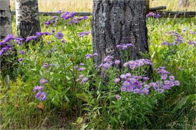 Nemaiah_GMP7900-118 - Gloria Melnychuk - Elkin Creek Ranch, Nemaiah Valley August 2019