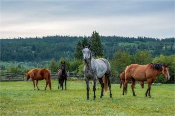 Nemaiah_GMP7920-158 - gm - Elkin Creek Ranch, Nemaiah Valley August 2019