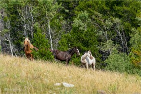Nemaiah_GMP8091-094 - gm - Elkin Creek Ranch, Nemaiah Valley August 2019