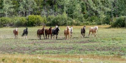 Elkin Creek Ranch, Nemaiah Valley August 2019 - Gloria Melnychuk