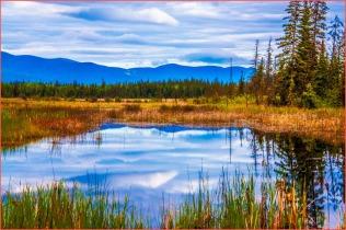 Meadow Lake - AnnMarie Brown