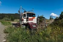 Not Going Anywhere Soon - Elkin Creek Guest Ranch, Nemaiah Valley - Nigel Hemingway