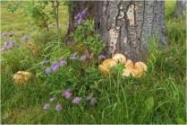 Fungi-Wildflowers - © Sharon Jensen