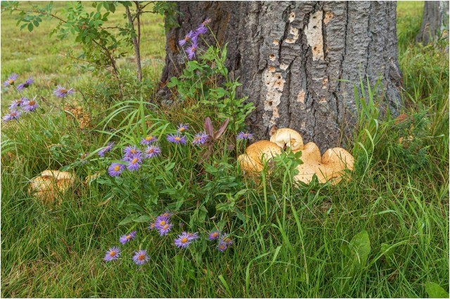 Fungi-Wildflowers - © Sharon Jensen