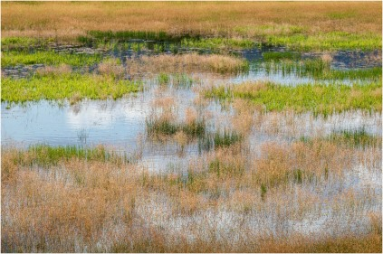 The Pond At Tommy's Garden © Sharon Jensen