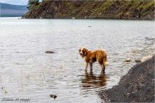 The Dog We Left Behind - DMHopp