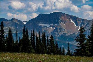 Trophy Mountain Meadow View- Gary Hardaker