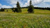 Wells Gray Park - Trophy Mountain Meadows - Wolfgang Viertel