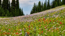 Trophy Mountain Meadows - Wells Gray Park - Wolfgang Viertel