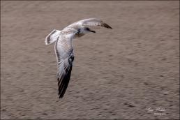 #21 Bird in Flight- Gary Hardaker