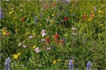 Trophy Mountain Blooms- Gary Hardaker
