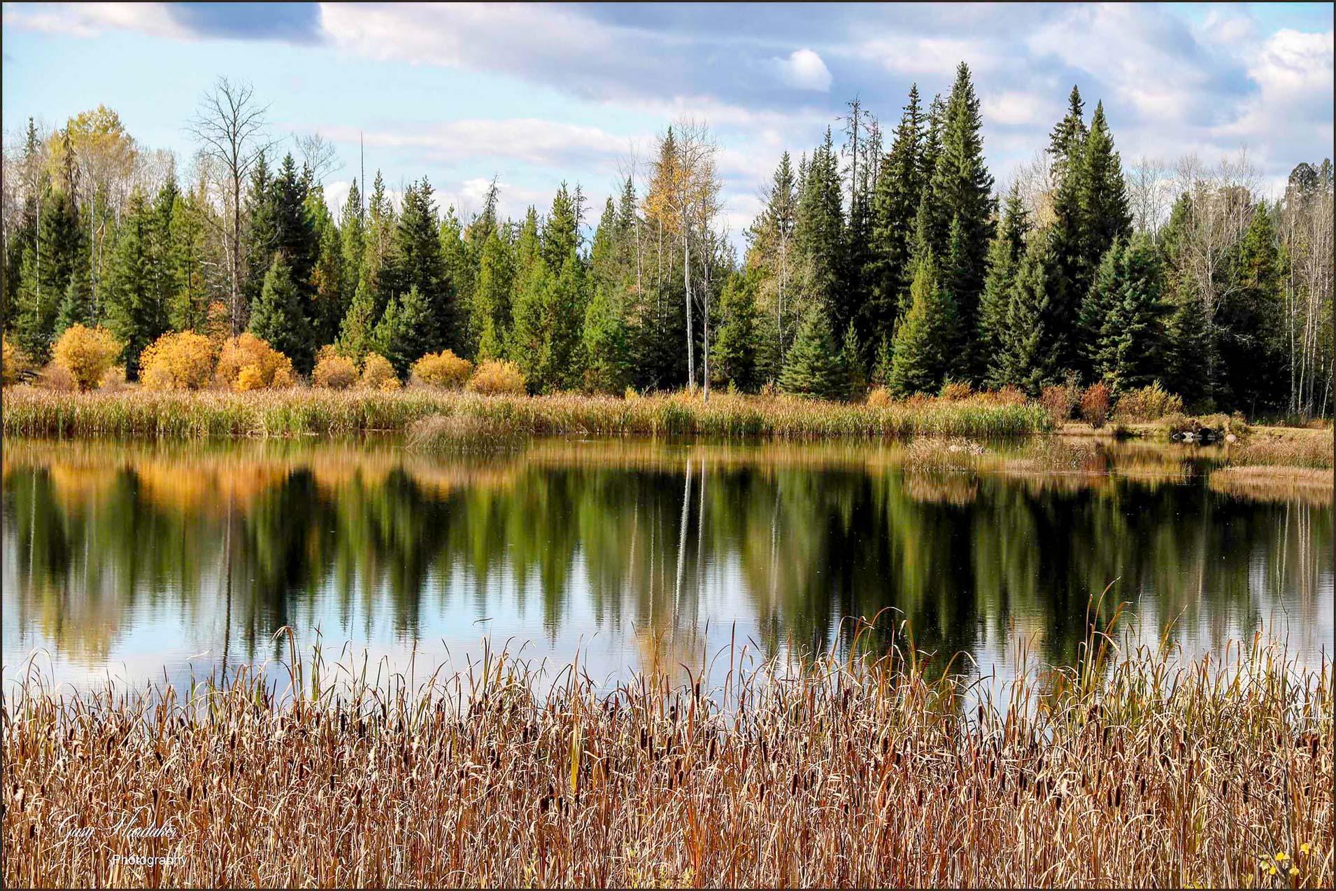 Autumn Reflection- Gary Hardaker