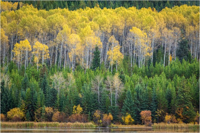 Autumn-Wolf Valley - © Sharon Jensen