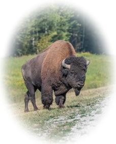 Buffalo - Derek Faiers