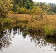 Cariboo Morning on Machete Lake Road - Derek Chambers