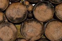 Aspen Firewood Pile, Wolf Valley Ranch - Derek Chambers