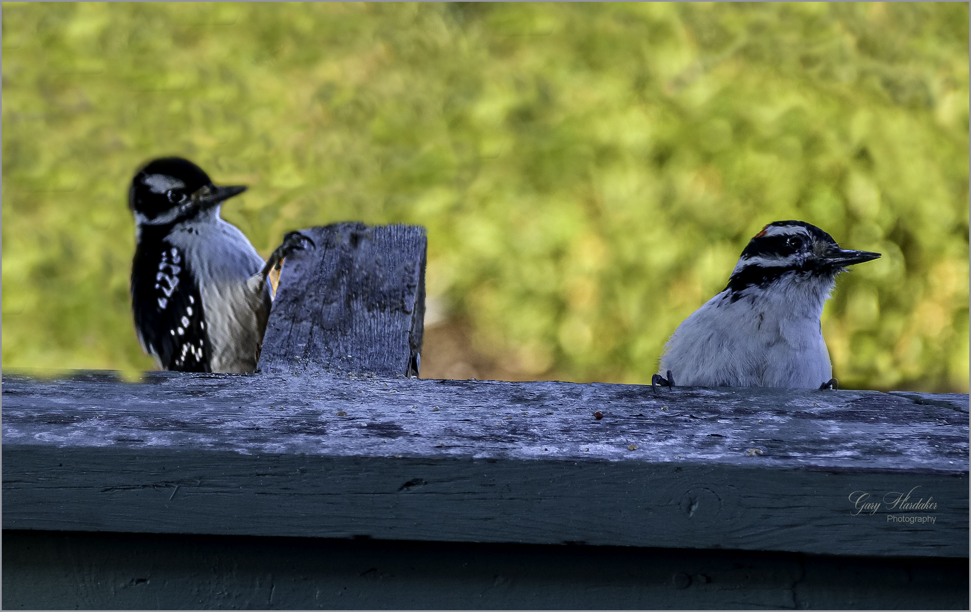 Birds of a Feather- Gary Hardaker