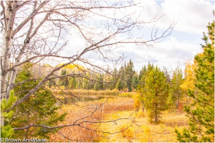 Fall in the Cariboo - AnnMarie Brown