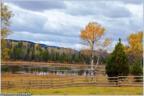 Fall Colours At Wolf Valley Ranch - AMbrown