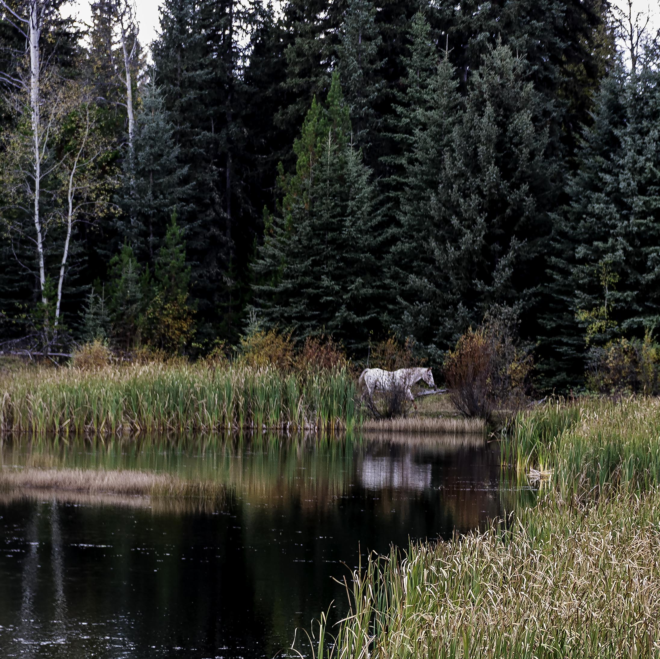 Horse at Wolf Valley Ranch - Gary Hardaker