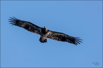 Just Gliding Along- Gary Hardaker