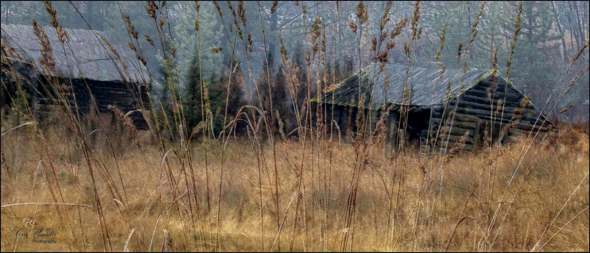 Old Homestead as seen through the Grass- Gary Hardaker