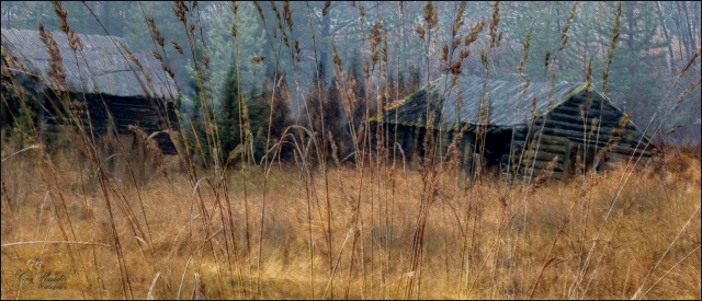 Old Homestead as seen through the Grass- Gary Hardaker