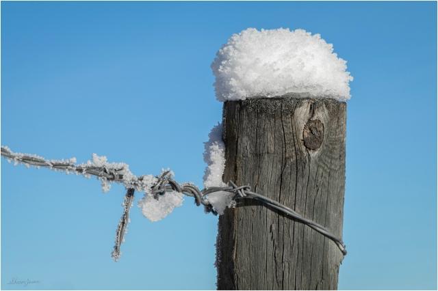 Hoar Frost - © Sharon Jensen