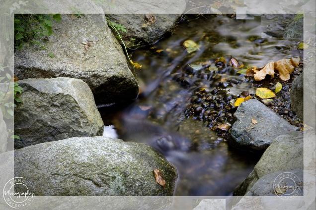 scavenger hunt # 1 colourful fall leaves - Nancy C. _