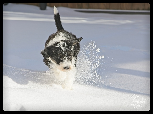 scavenger hunt # 14 Winter Wonderful Puppies first snow day can't get more wonderful - Nancy C. _