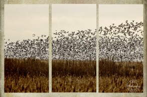 scavenger hunt # 18 winter triptych - Nancy C. _