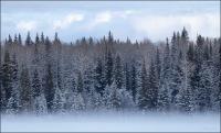 Winter Mist-Webb Lake - © Sharon Jensen