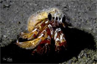 Hermit Crab (local)- Gary Hardaker